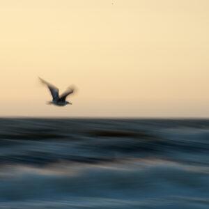 marianne dams - landscape - bird in the sky