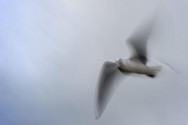 marianne dams - nature - bird