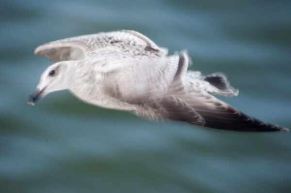 marianne dams - nature - flying bird