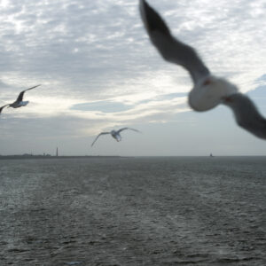 marianne dams - landscape - flying birds