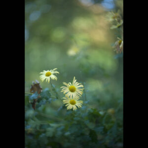 Marianne dams - nature - yellow fower
