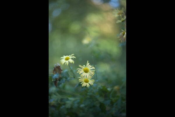 Marianne dams - nature - yellow fower