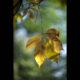 Marianne dams - nature - autumn leaf on tree
