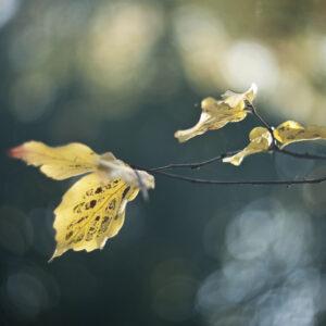 Marianne dams - nature - autumn leaves