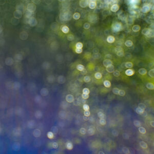 marianne dams - landscape - close up flower