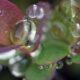 marianne dams - nature - rain on leaf