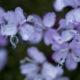 marianne dams - nature - purple flower