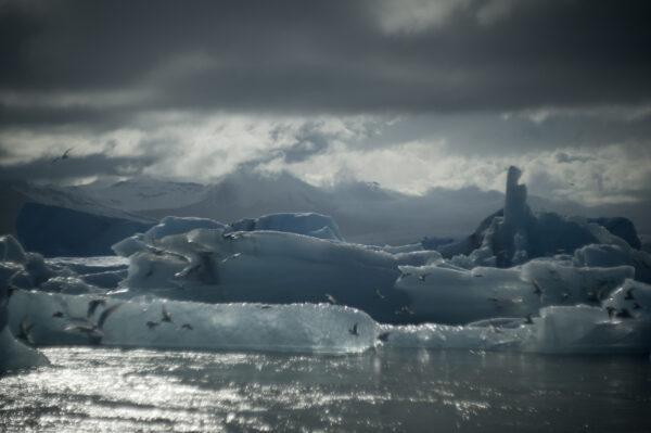 marianne dams - landscape - birds iceland